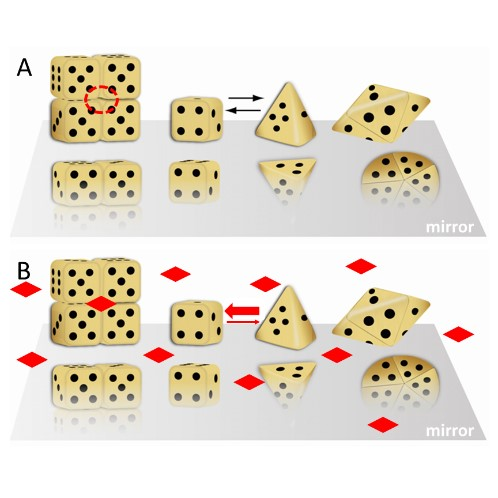 A dice based illustration of the morpheein phenomenon wherein alternate protomer conformations produce alternate assemblies that have alternate physiologically relevant functions. (A) Cubic and pyramidal dice are used as symbolic representations of alternate conformations of a protomer that can self-assemble through association of two complementary surfaces.  These are the die face with one and with four dots.  The tetramer resembles a stack of boxes; the pentamer resembles a flying saucer. The red dashed circle is a multimer-specific surface cavity that can serve as a ligand binding site. (B) The diamond shaped ligands can bind to the multimer-specific binding site and draw the equilibrium toward the assembly of cubic dice, thus dictating protein function.