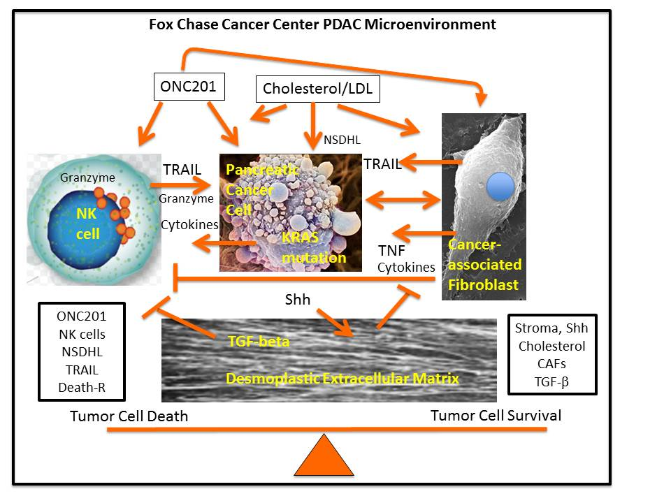 Fox Chase Cancer Center PDAC Microenvironment