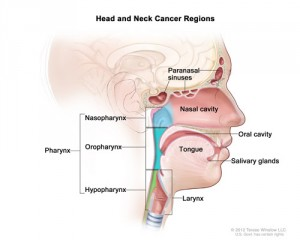 """What Exactly is a """"Head and Neck"""" Cancer? 
