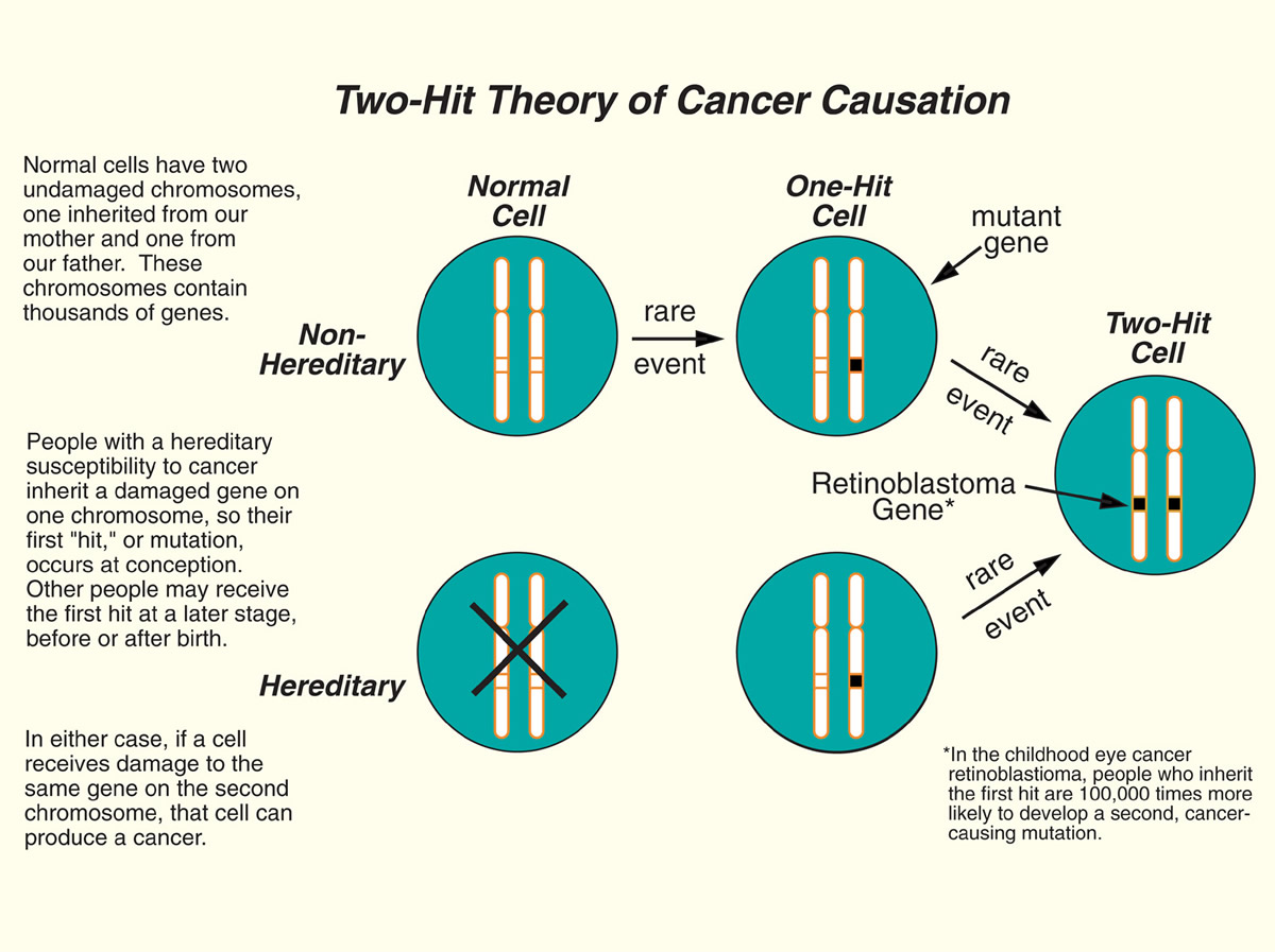 The Two-Hit Theory of Cancer Causation