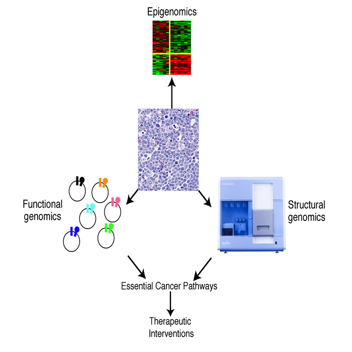 Functional and Structural Cancer Genomics