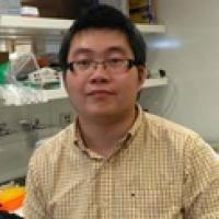 Yifan Wang PhD