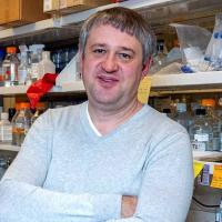 Grivennikov's two-year term on the committee begins at the upcoming American Association for Cancer Research (AACR) Annual Meeting 2020, which is being held April 24-29 in San Diego, CA. The Tumor Microenvironment Working Group formed in 2006 to improve scientific contributions to this area of cancer research.